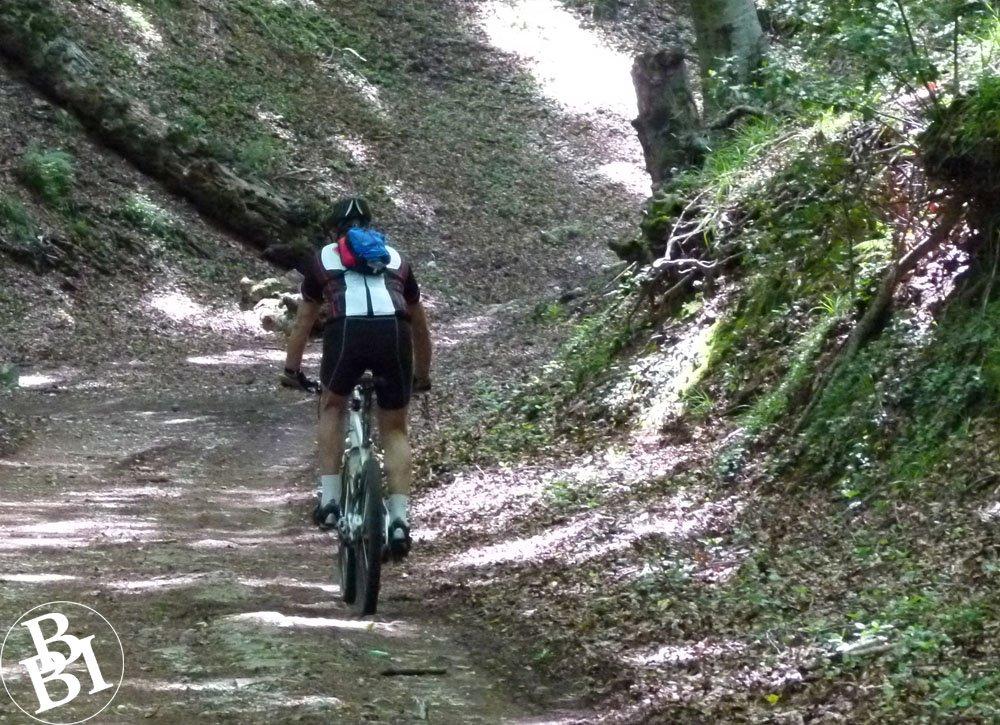 Man cycling through woodland