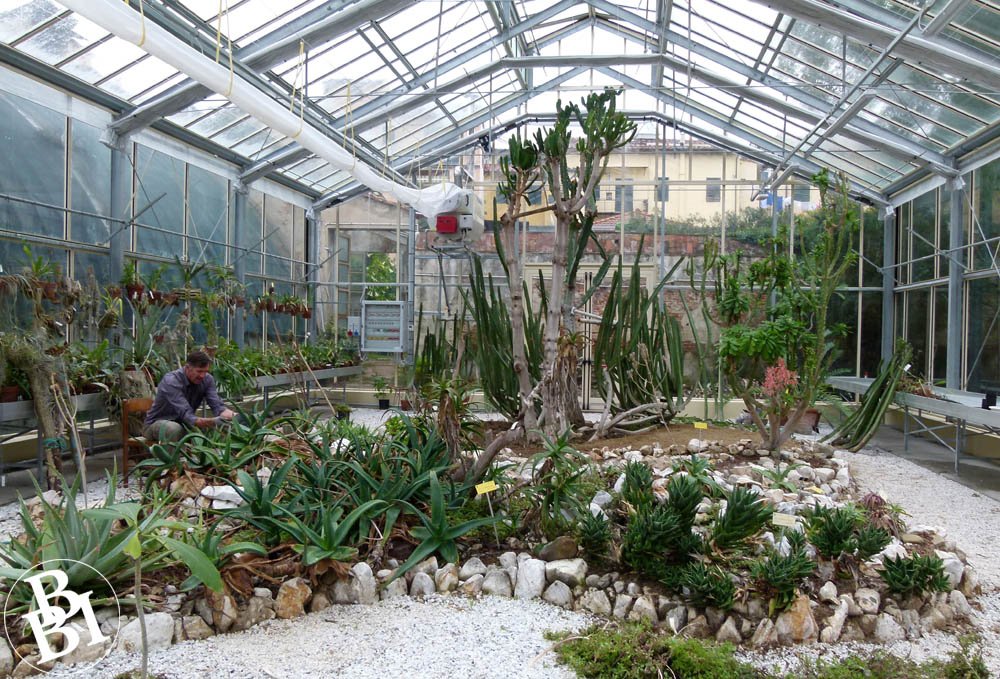 Greenhouse full of succulents