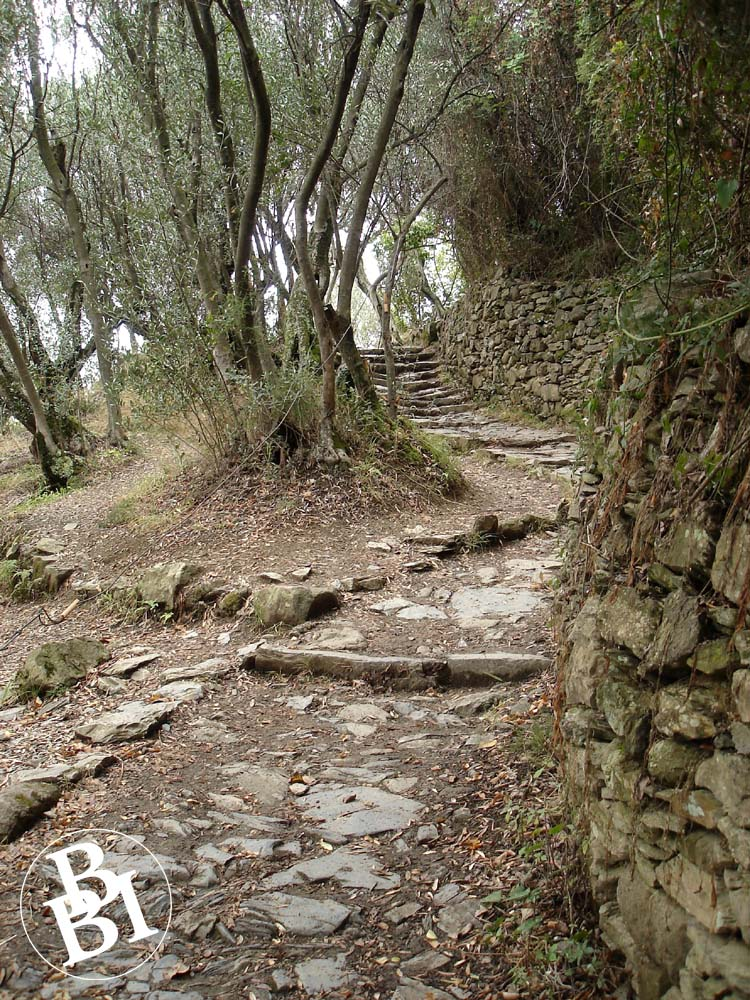 Hiking trail with steps and trees