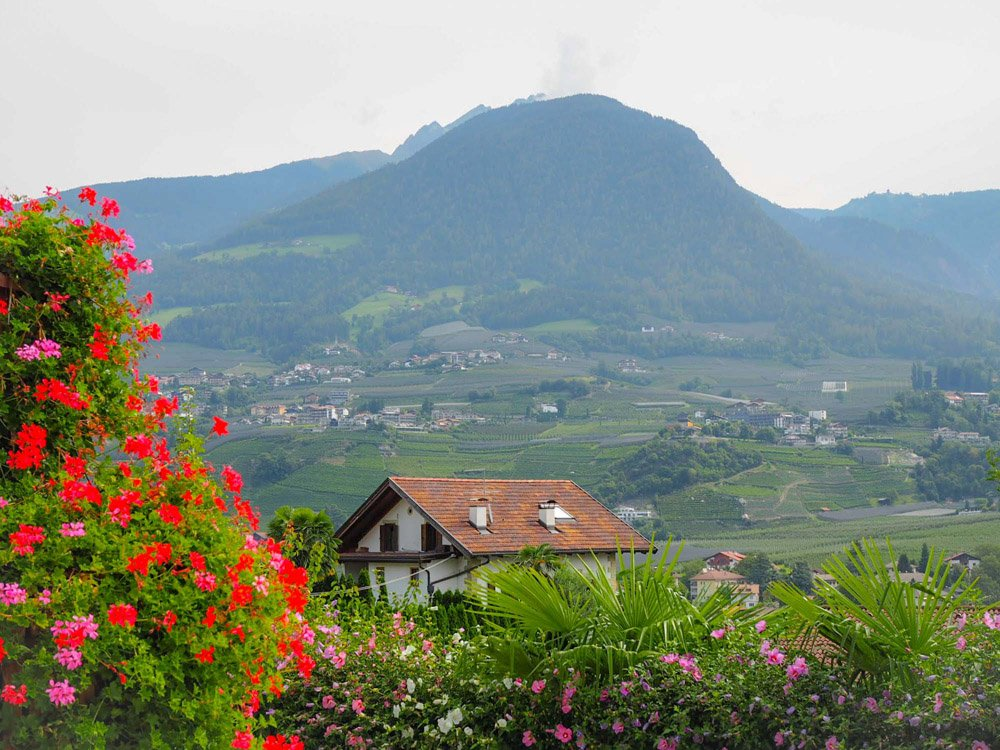 View of house and mountains with red flowers in foreground