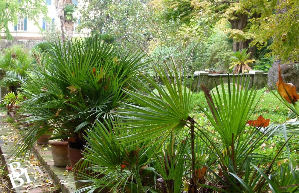 Varied plants at the Pisa Botanical Garden