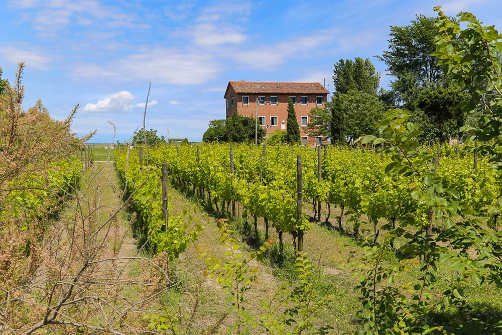 Vineyard with trees and a house