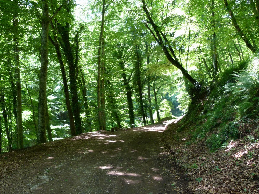 Trees and a forest path on the Gargano Peninsula