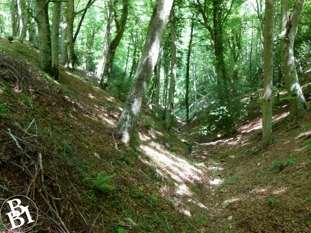 Dense woodland in the Umbra Forest