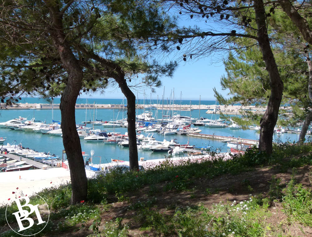 Trees in front of harbour with boats